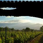 paysages corses avec vigne