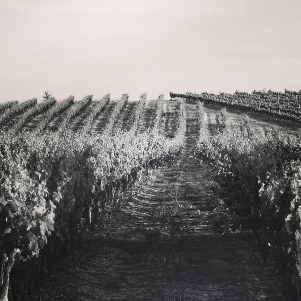 vignerons aghione